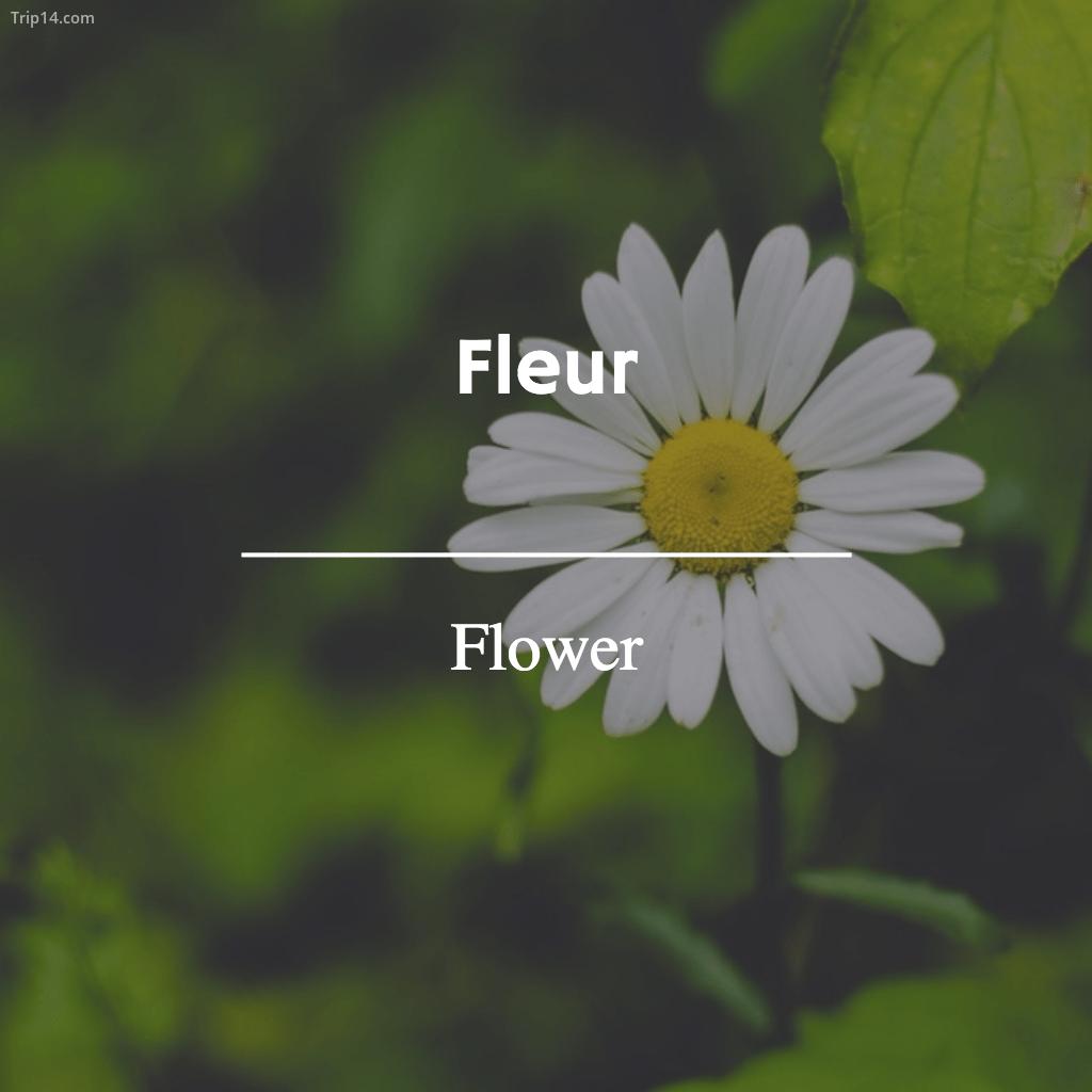 Fleur - Flower