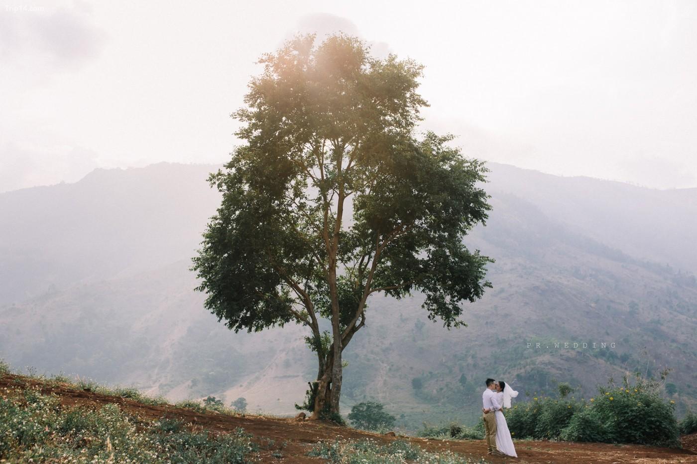 Một cái cây cô đơn khác bị đem ra làm nền cho cặp đôi khác