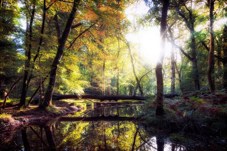 Khu rừng Mới đã từng là nơi dậm chân của William the Conqueror © Joana Kruse / Alamy Kho ảnh