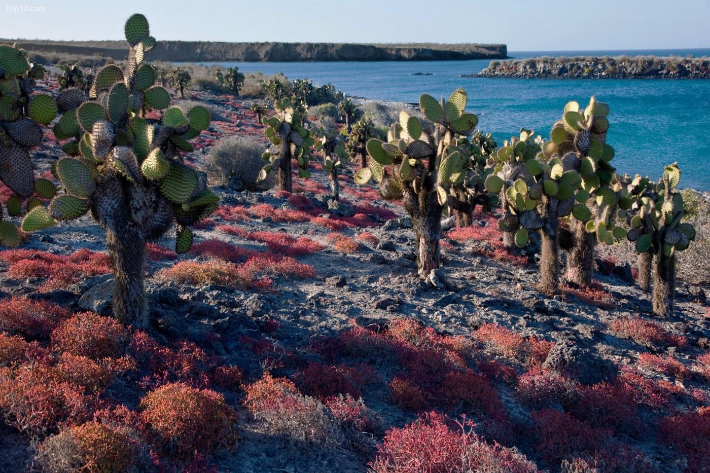Quần đảo Galápagos nổi tiếng với động vật, thực vật và sinh vật biển độc đáo | © John Warburton-Lee Nhiếp ảnh / Alamy Kho ảnh
