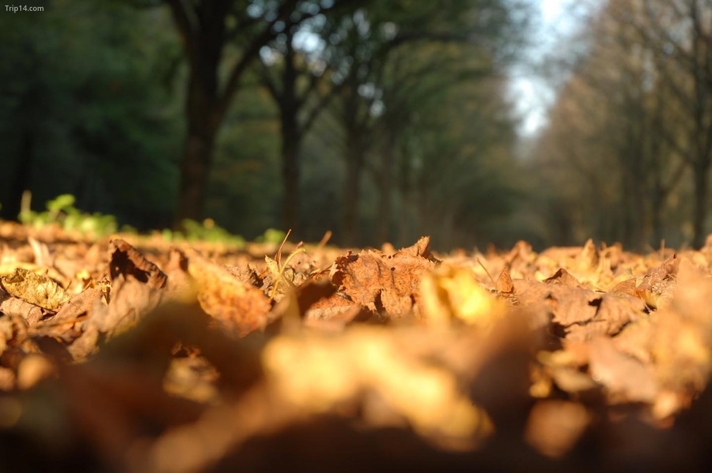 Amsterdamse Bos, Amstelveen