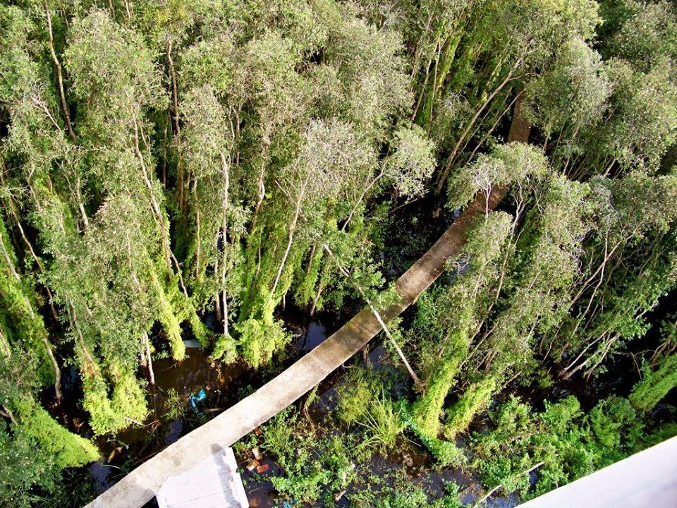 rừng tràm Làng nổi Tân Lập