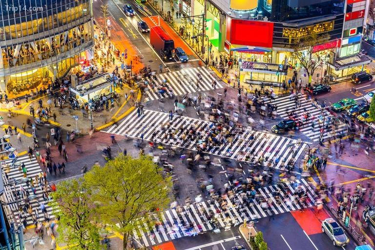 Ngã tư Shibuya ở Tokyo