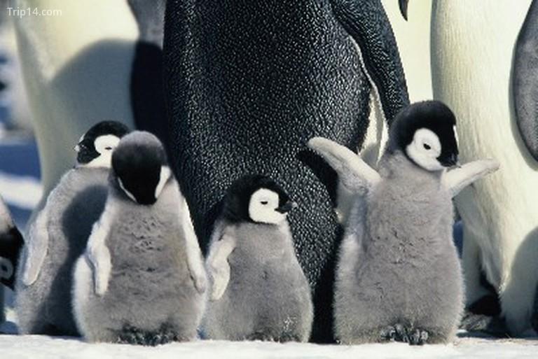 Tháng ba của chim cánh cụt (2005) - Trip14.com