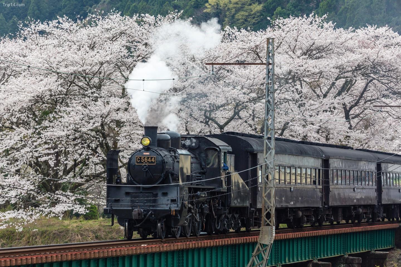Đường sắt Oigawa